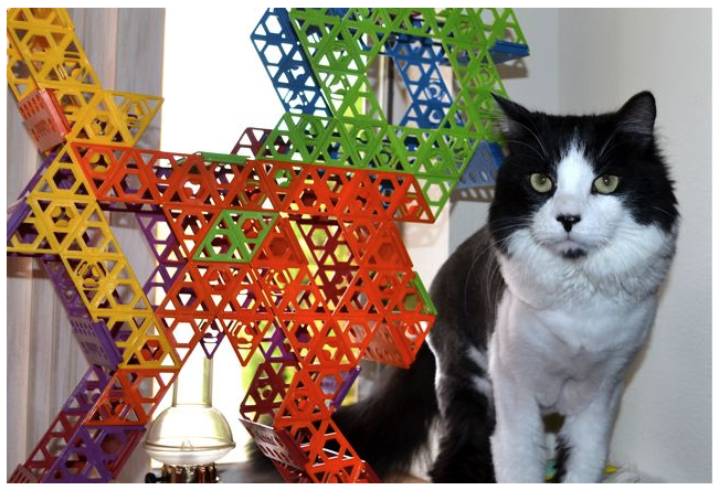 Qubits cat