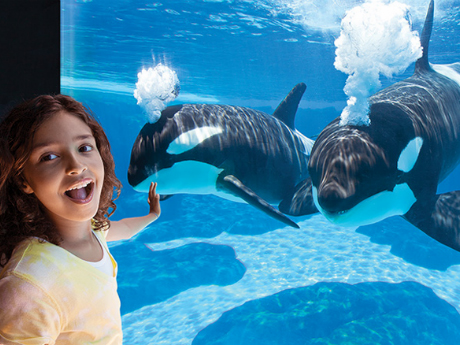 Shamu and guest