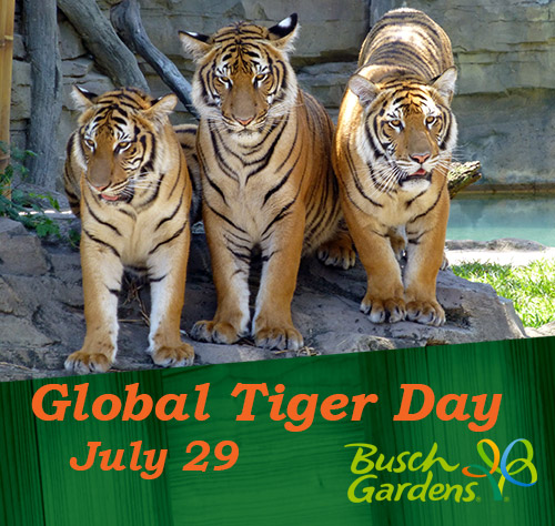 Tiger Day at Busch Gardens